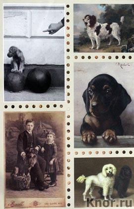 """Собаки. Старинные открытки и иллюстрации. Серия """"Старинный альбом"""""""