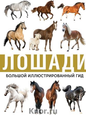 """Лошади. Серия """"Большой иллюстрированный гид"""""""