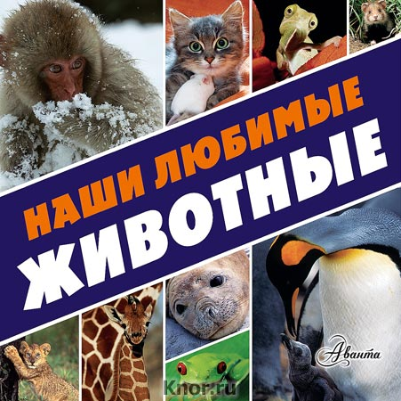 Наши любимые животные