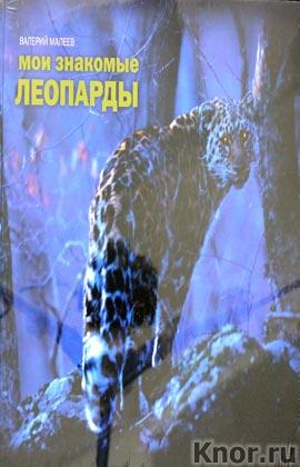 """Валерий Малеев """"Мои знакомые леопарды"""""""