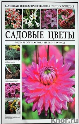 Большая иллюстрированная энциклопедия. Садовые цветы