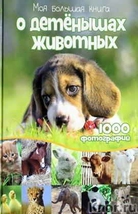 """Ф. Симон, М. Бойе """"Моя большая книга о детенышах животных"""""""